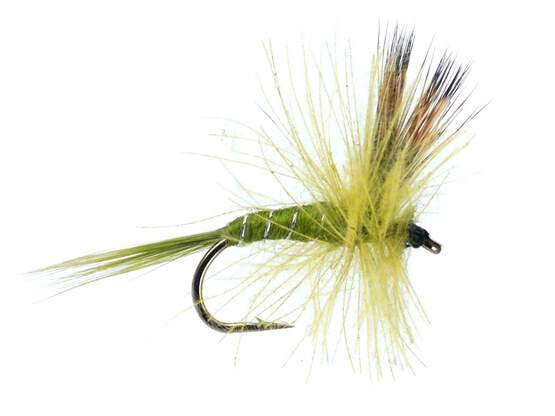 CDC Dry Pale Olive 14