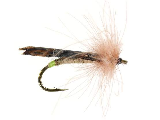 S2 Brown Sedge - Brown