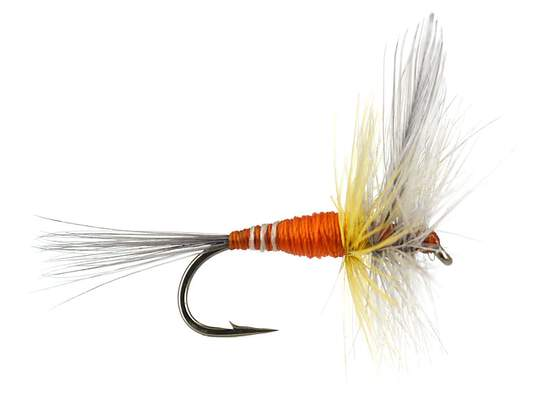 French PL Orange Winged