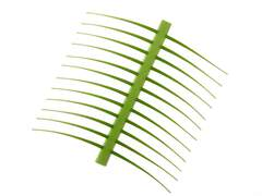 J:son Realistic tails & antennas - regular - 48 pc. - green