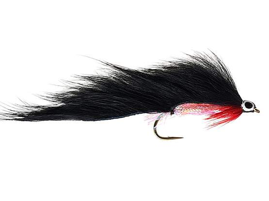 Black Zonker Red Throat